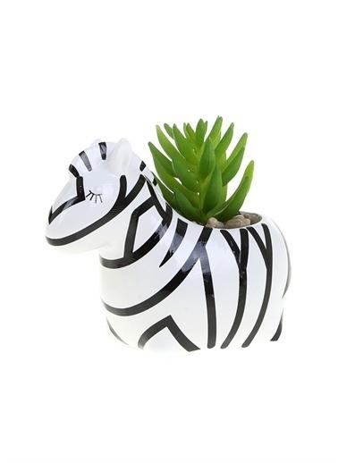 Boyner Evde Boyner Evde Zebra Saksı Bitki Renksiz